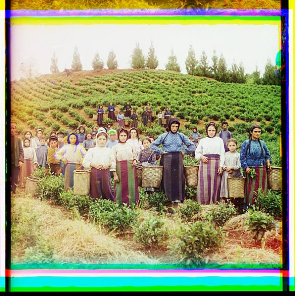 100 Years Old Color Photos of the Russian Empire Workers Harvesting Tea
