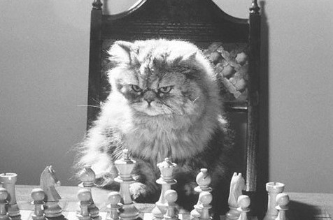 5 reasons why cats are amazingly smart chess cat