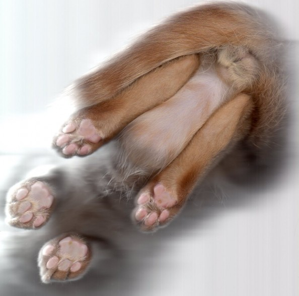 Scanning Cute Paws Cat Scan Explicit
