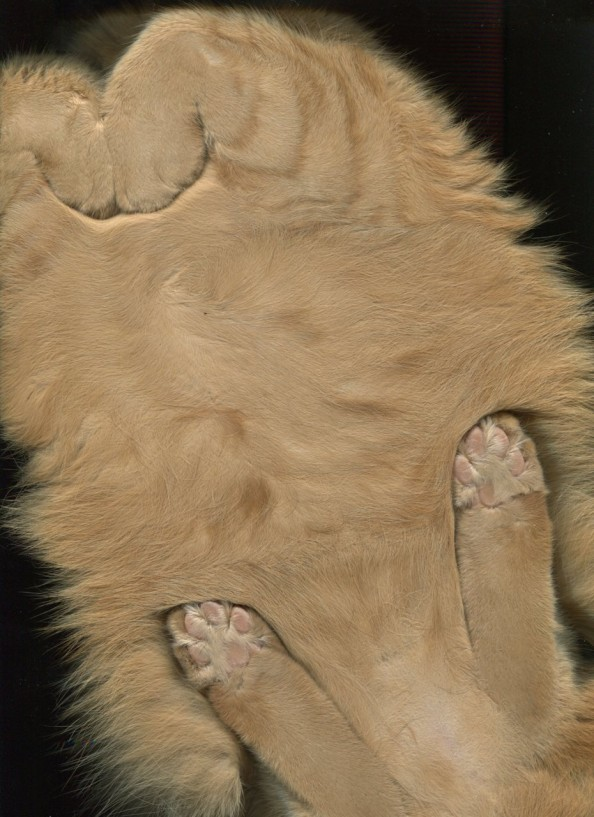 Scanning Cute Paws Light Brown Cat Scan