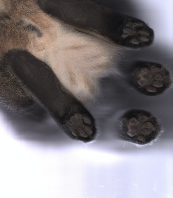 Scanning Cute Paws Four Paws Cat Scan