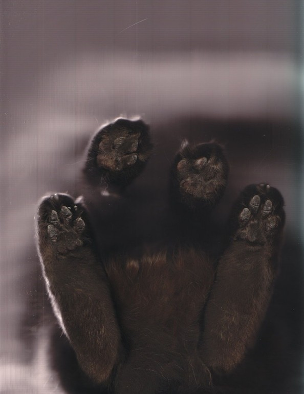 Scanning Cute Paws Cat Scan While Kitty Is Standing