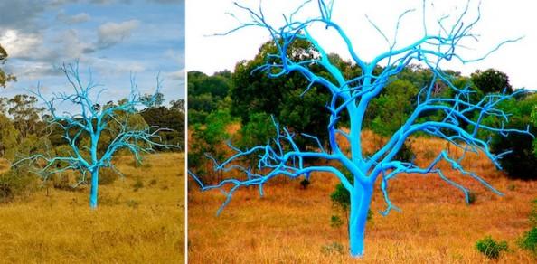 Project Tree Curtis Killorn