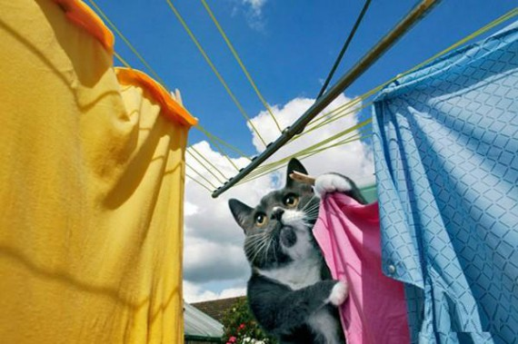 House Cat Doing The Laundry