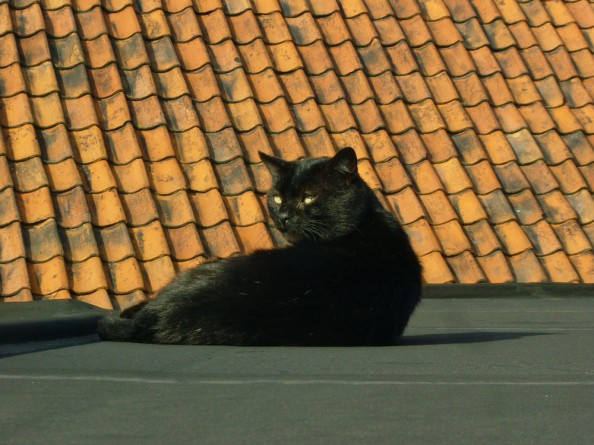 The Black Cat on a Roof