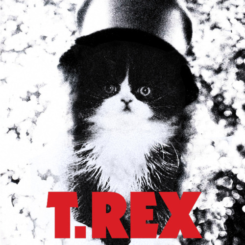 Kitten Covers T Rex
