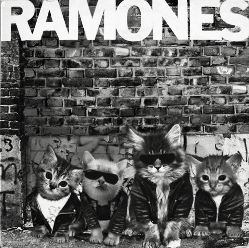 Kitten Covers The ReMEOWns Ramones