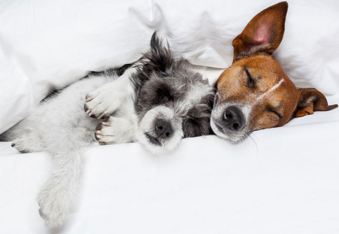 Two Dogs Sleeping