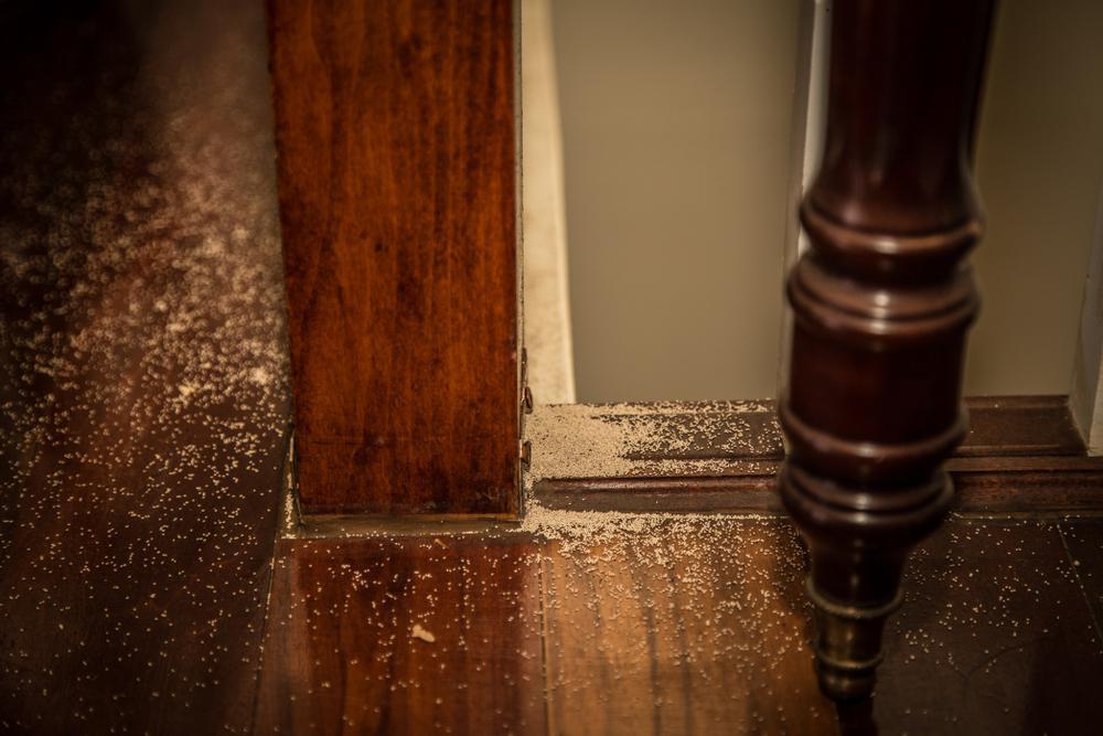 Termite Infestation