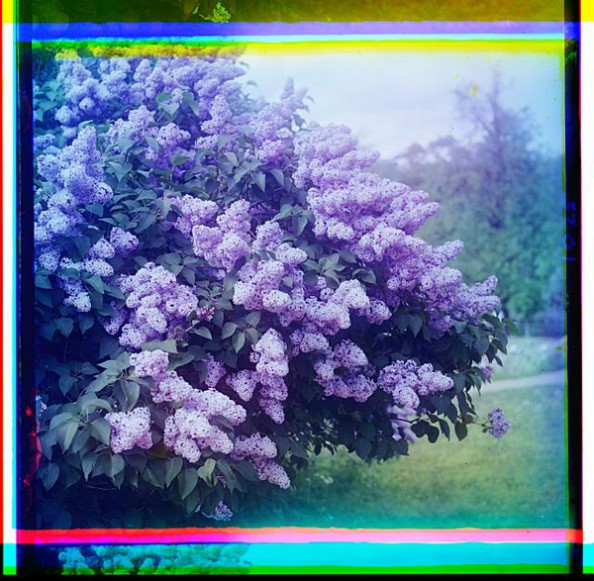 100 Years Old Color Photos of the Russian Empire Lilacs