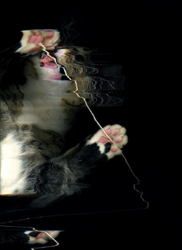 Scanning Cute Paws Cat Scan Scratch