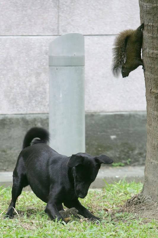 Dog Attacking Baby Squirrel