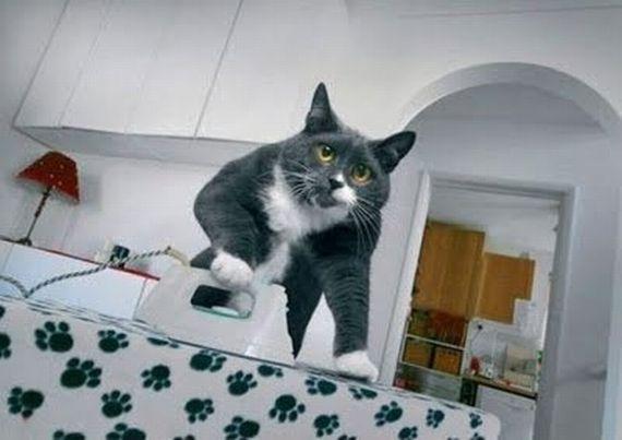 House Cat Ironing