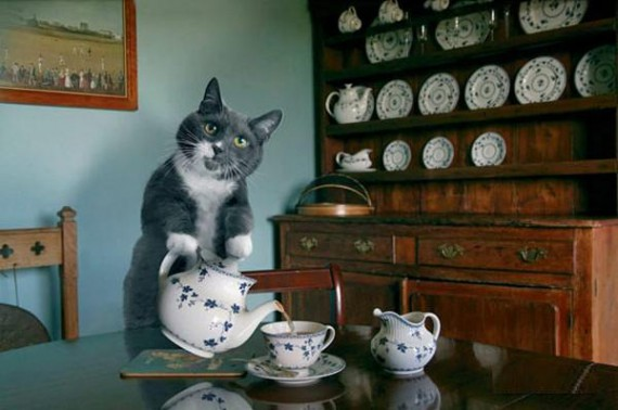 House Cat Pouring Tea