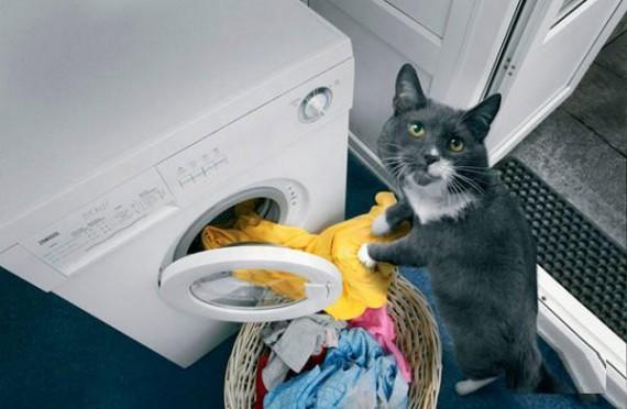 House Cat Using The Washing Machine