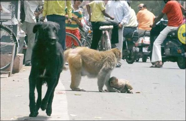 The Stray Dog Running Away