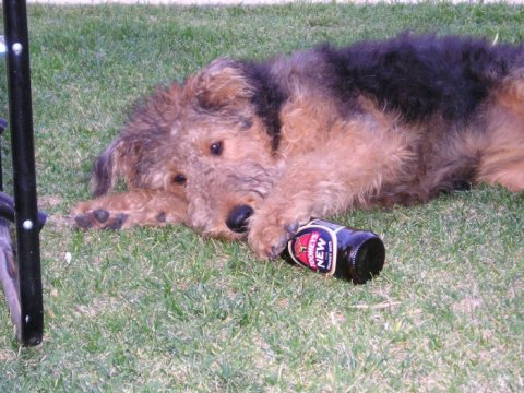 Alcoholic Dogs Drinking Funny