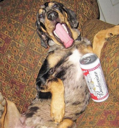 Alcoholic Dogs Drinking Funny 11