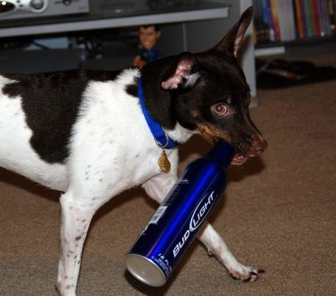 Alcoholic Dogs Drinking Funny 15