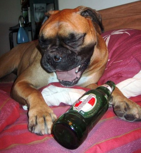 Alcoholic Dogs Drinking Funny 2
