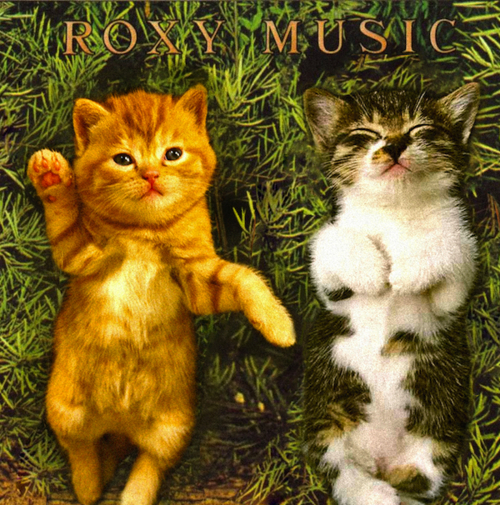 Kitten Covers Roxy Music