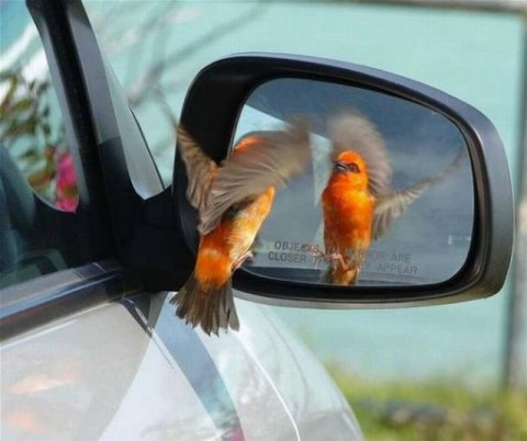 Picture At The Right Moment Bird