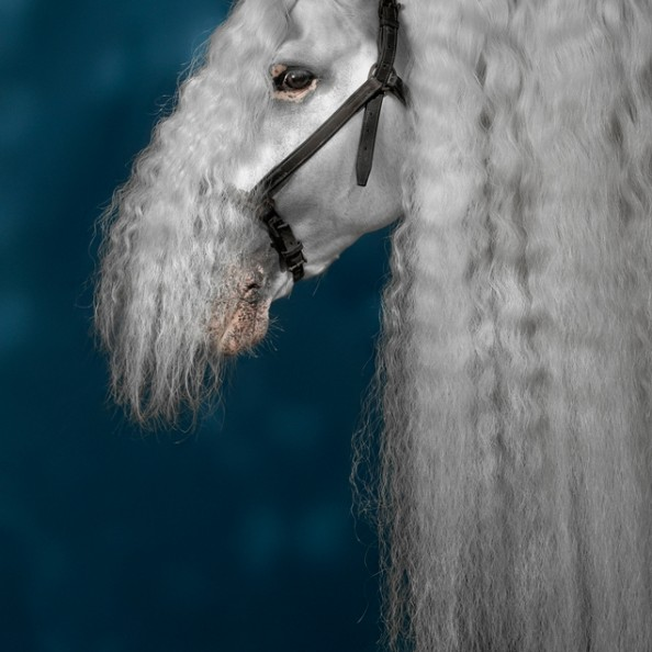 Robert Bartholot Photography - Animals
