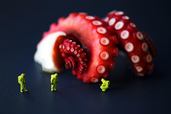 Christopher Boffoli Octopus Survey Team 594px