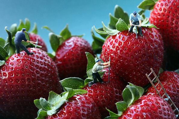 Christopher Boffoli - Strawberry Seed Poachers 594px