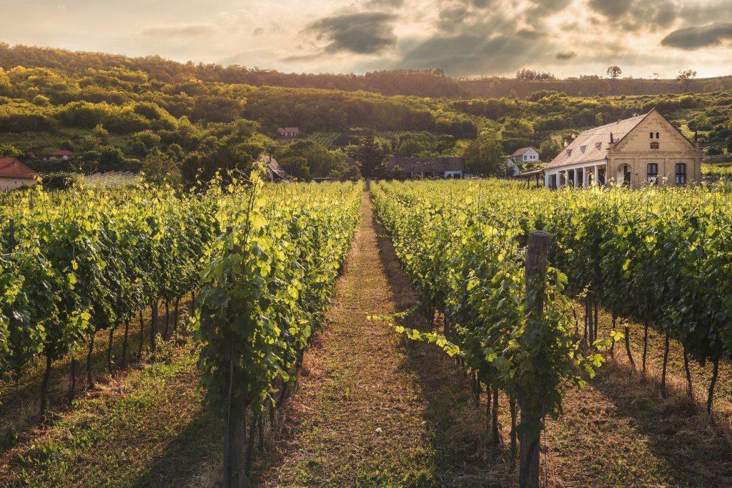 10 Vineyard Wedding